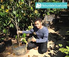 kebunbibitbuah.com