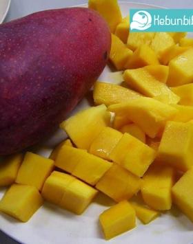 mangga yuwen kebun bibit buah