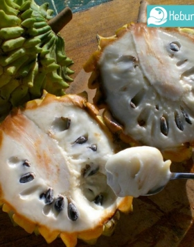 buah biriba kebun bibit buah