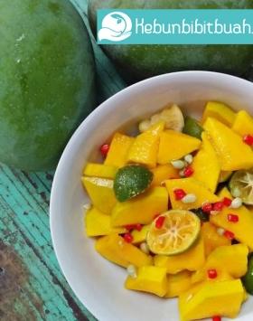 asisan mangga kweni kebun bibit buah